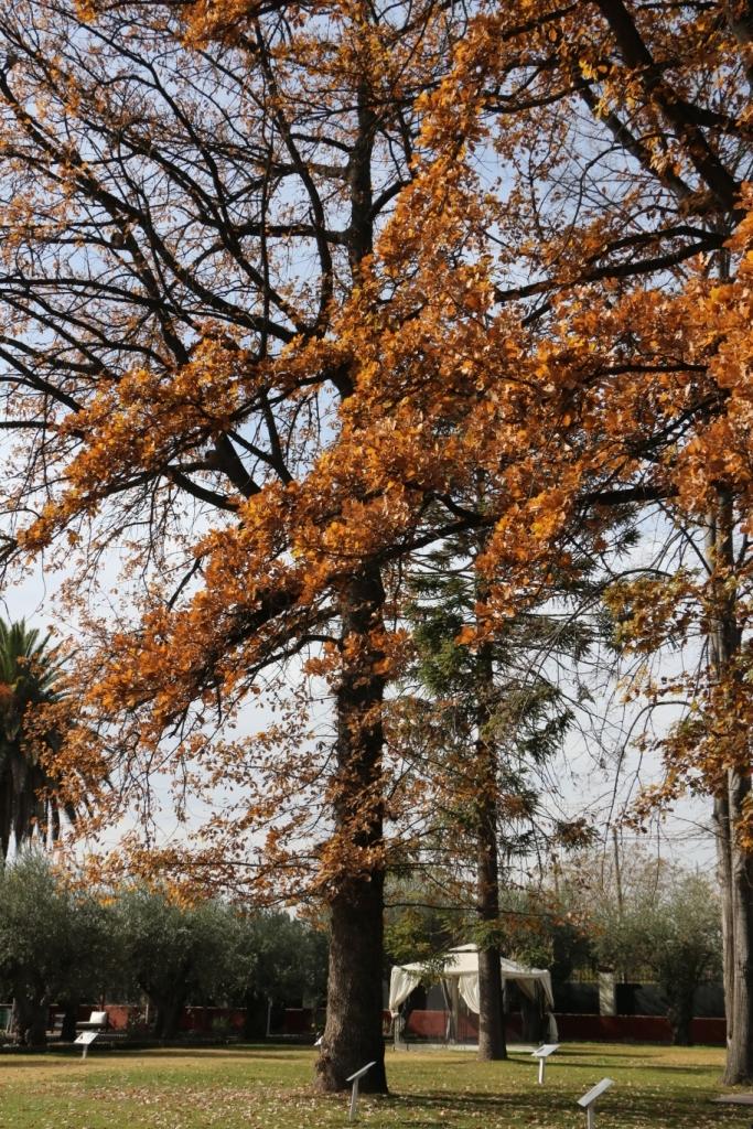A Alta Vista tem jardins ideais para um piquenique